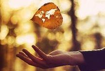 Autumn / My favorite season! / by Lia | sugar & snapshots