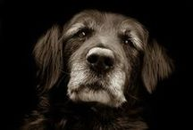 Dogs / by Lia | sugar & snapshots
