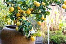 GARDEN ideas / Garden ideas, garden design, and general gardening ideas and tips.