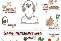 Bunnies / Bunny information