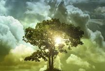God's beautiful creation / by Sandra Ransom