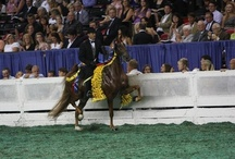 World's Championship Horse Show - 2012 Louisville, KY