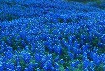 Flowers / by Linda Wilson's TUPPERWARE