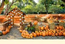 Halloween / by Linda Wilson's TUPPERWARE