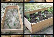 Garden beds / Raised garden beds