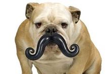 Movember! / We love mustaches and dogs - why not combine the two with this collection? / by Muttropolis
