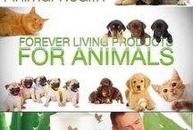 Healthy animals