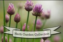 herb garden / by Laura Watt