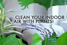 Plants great for indoor air quality