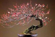 JAPAN_Bonsai 盆栽 / by Masaki Kawato