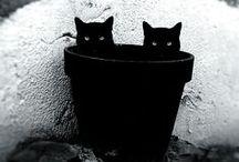 ☻black black black☻