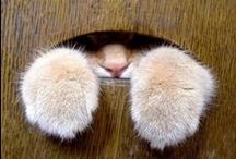 Funny & Cute Cat 2 / by Masaki Kawato