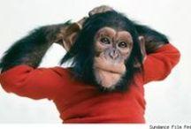 Portraits / L'animal est-il une personne...