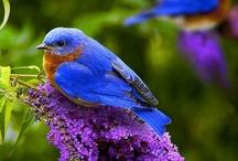 purty birdies / by Fourteen Countess