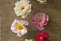 flowers & flower love
