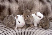 Rabbits! / Definitely my favourite animal and cute, so cute! / by Julia Monument