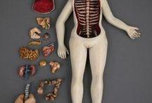 estructuras y anatomia