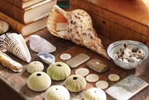 Shell Seeker / The trend for bringing rustic woods and shells into the home is going strong. The perfect addition to a coastal home.