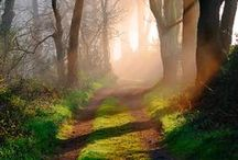 Path Through The Forest / If you go off into a far, far forest and get very quiet, you'll come to understand that you're connected with everything. (Alan Watts)  / by Halina Lis