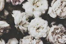Florals | Stripes