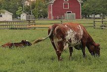 Farm Fun / by Lindsey Long