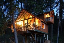 Cool Tree Houses  / Who doesn't love a tree house? I had a couple growing up but nothing like the ones on this board.