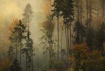 In the Woods / by Dan Ashbach / Dan330