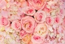 palette - pink