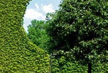 HOMES & GARDENS / Amazing Gardens, Topiary, Homes & Interiors, Terraces, Jardins à la Française, Bowling-greens, Trees and Flowers, Woods