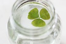 St. Patrick's Day Happenings,Eats and D.I.Y Decor! / by The Single Mom Chronicles