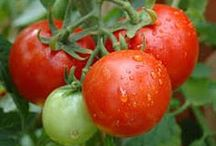 Dan330 - Garden Tips / Tips we have collected and want to share. / by Dan Ashbach / Dan330