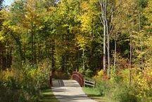 Michigan - Need To See