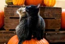 Halloween / by Renee Martin