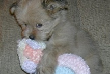 Puppies and other cute things