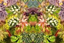 Plants PLEASE!!  / by Pamela Macko