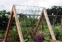 Edible Gardens / by Pamela Macko