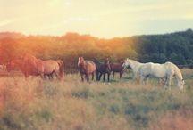 Horses. / by Lex Lisle