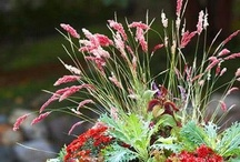 Gardening and landscaping ideas