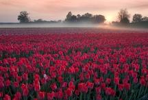 Travel-Paradise Divine, Netherlands ✈ / World * Pictures * Images * Planet * Beauty * Nature * Views * Scenery * Amsterdam * Zaanse Schans * Holland * Zandvoort * Giethorn * Bunnik * Kinderdijk * Veluwezoom * Groningen * The Hague * Uddel * Leerdam * Utrecht * Volendam * Rotterdam. Travel to wonderful places in the Netherlands. / by Darlene McLean
