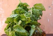 Basil and other herbs / by Connie Glenn