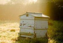 Backyard Beekeeping / by Jennie Smith