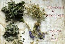 In my herb garden... / by Jennie Smith