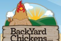 Planning for Chickens!! / Next year, we hope, we will have a few  poultry pals in our back yard!  :) / by Jennie Smith