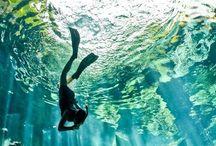 under the sea ...