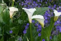 Garden Design and Plants / Backyard and Front garden ideas. Interesting plants especially flowers. / by Astrida Lilija