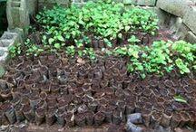 Hunger & Gardening / http://havserve.org/shop/hunger-gardening.html