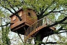 Among the Trees / Making a home amid the branches...treehouses!