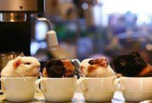 tiny animals in teacups