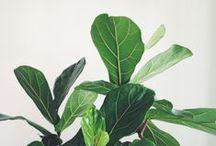 plants / by becca mole