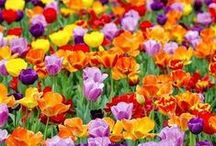 colori vegetali